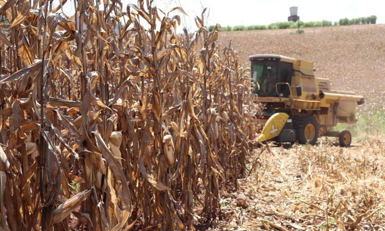 VALE INCENTIVO DISPONÍVEL NA AGRICULTURA